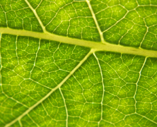 Leafy Texture Photoshot for Background